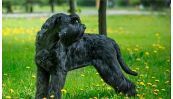 Размер собаки MEDIUM